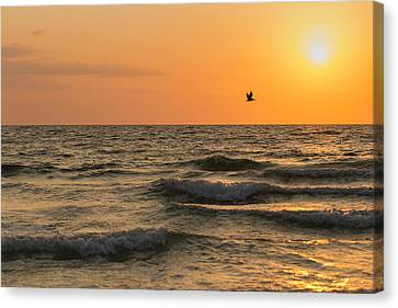 Against The Wind Canvas Print by Christopher L Thomley