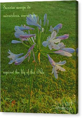 Agapanthus Dawn Canvas Print by ARTography by Pamela Smale Williams