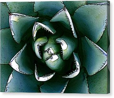 Agave Century Cactus Canvas Print by Kathleen Stephens