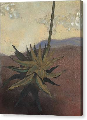 Agave Canvas Print by Fred Chuang