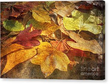 Age Of Character Canvas Print by Kathi Mirto