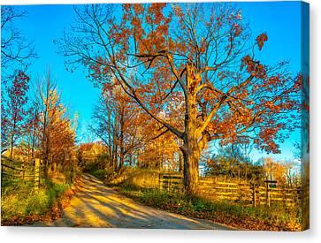 Split Rail Fence Canvas Print - Aged Beauty 3 by Steve Harrington
