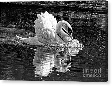 Aggressive Beauty Black And White Canvas Print