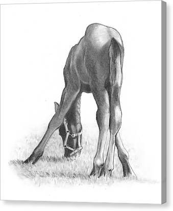 Agility Canvas Print by Joyce Geleynse