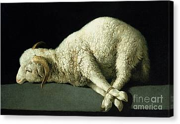 Lamb Canvas Print - Agnus Dei by Francisco de Zurbaran