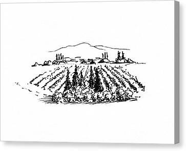 Wine Scene Canvas Print - Agricultural Landscape by Masha Batkova