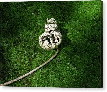 Aguished Leaf Canvas Print by Douglas Barnett