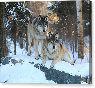 Aidan And Denali-brothers Forever Canvas Print by Gerry Sibell