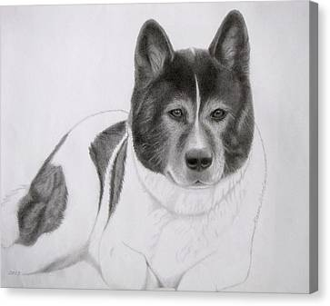 Working Dog Canvas Print - Akita Coco by Karen Wood