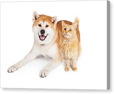 Akita Dog And Tabby Cat Over White Background Canvas Print by Susan Schmitz