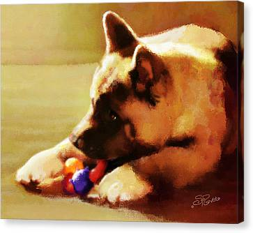Akita Puppy Canvas Print by Suni Roveto