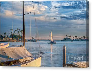 Alamitos Bay Inlet Sailboat Canvas Print by David Zanzinger