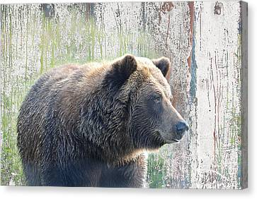 Canvas Print featuring the photograph Alaska Brown Bear  by Dyle   Warren