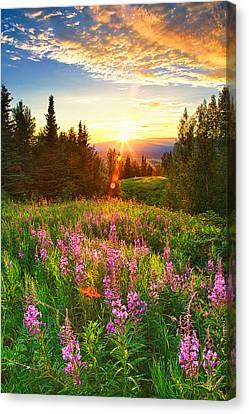 Alaska Field Canvas Print by Ed Boudreau