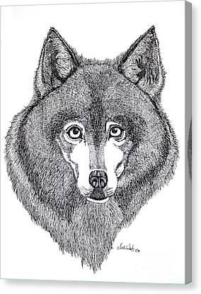 Alaskan Husky Canvas Print by Nick Gustafson