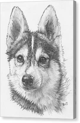 Alaskan Klee Kai Canvas Print by Barbara Keith