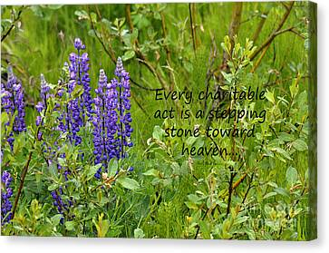 Alaskan Lupine Heaven Canvas Print by Diane E Berry