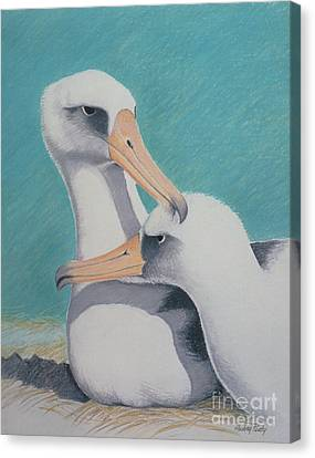 Albatros Love Canvas Print