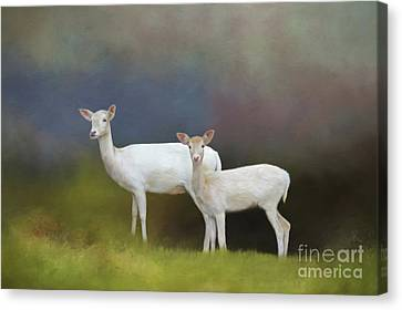 Albino Deer Canvas Print