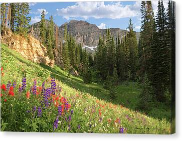 Albion Basin Wasatch Mountains Utah Canvas Print by Utah Images