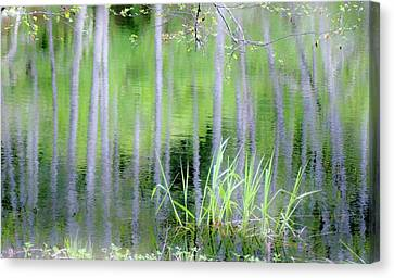 Alder Reflections Canvas Print by Sheila Ping