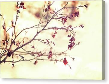 Alders Canvas Print by Priska Wettstein