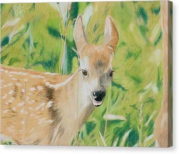 Alert Fawn Canvas Print by Miriam A Kilmer
