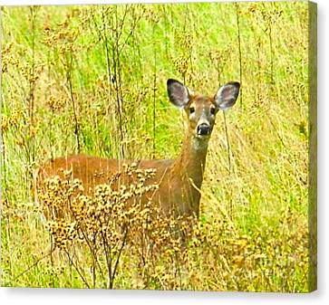 Indiana Scenes Canvas Print - Alert White Tail Doe In Field by Julie Dant