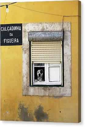 Alfama Dog In Window - Calcadinha Da Figueira  Canvas Print
