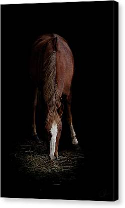 Alfresco Canvas Print by Paul Neville