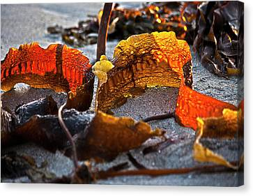 Algae At Low Tide Canvas Print by Heiko Koehrer-Wagner