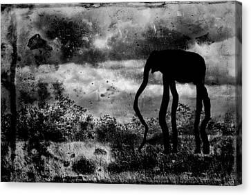 Dream-5 Canvas Print by Rudy Umans
