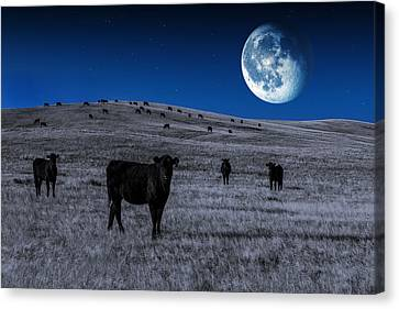 Angus Steer Canvas Print - Alien Cows by Todd Klassy