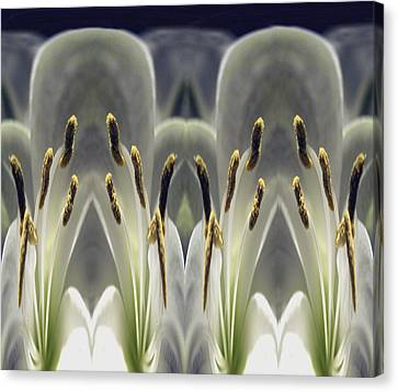 Alien Lily Canvas Print by Terence Davis