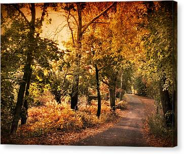 Country Lanes Canvas Print - Alight by Jessica Jenney