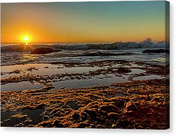 Aliso Point Canvas Print by Kelley King