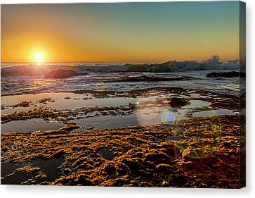 Aliso Point With Flare Canvas Print by Kelley King