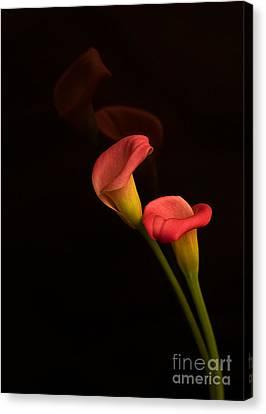 Alison's Flower Canvas Print by Robert Pilkington