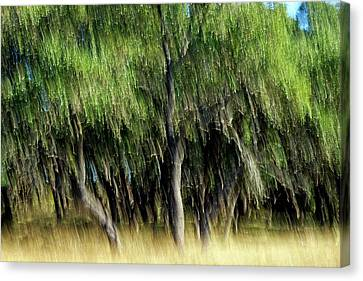 Alive Canvas Print by Bill Morgenstern