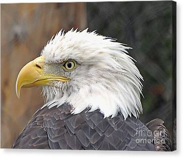 All American Bird Canvas Print by Martha Ayotte