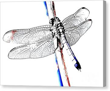 All American Dragonfly Canvas Print