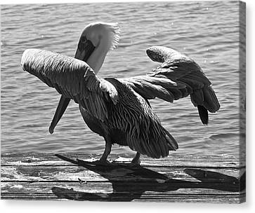 All Clear For Take Off Canvas Print by Bonnes Eyes Fine Art Photography