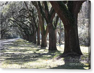 Old Country Roads Canvas Print - All For One And One For All by Carol Groenen