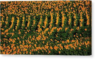 Canvas Print featuring the photograph All In A Row by Chris Berry