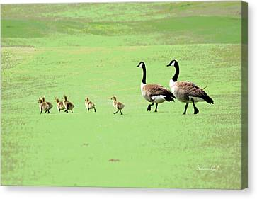 Geese Canvas Print - All In The Family II by Suzanne Gaff