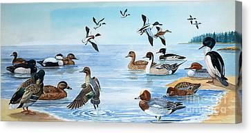 All Sorts Of Ducks Canvas Print by English School
