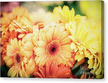 Canvas Print featuring the photograph All The Daisies by Ana V Ramirez