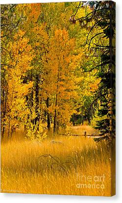 All The Soft Places To Fall Canvas Print