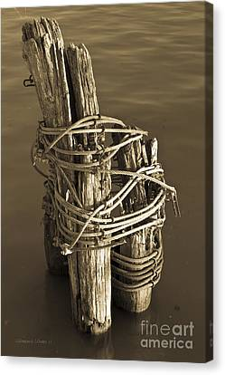 All Tied Up Canvas Print by Gordon Wood