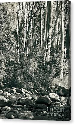 Canvas Print featuring the photograph All Was Tranquil by Linda Lees